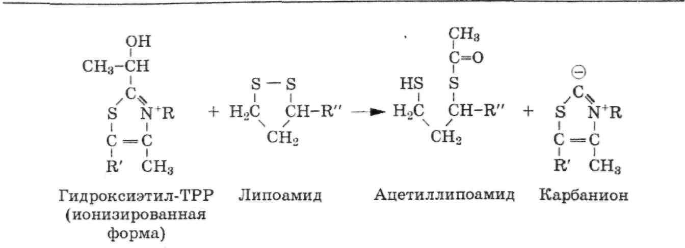 Фолиевая кислота биохимия реферат 2247
