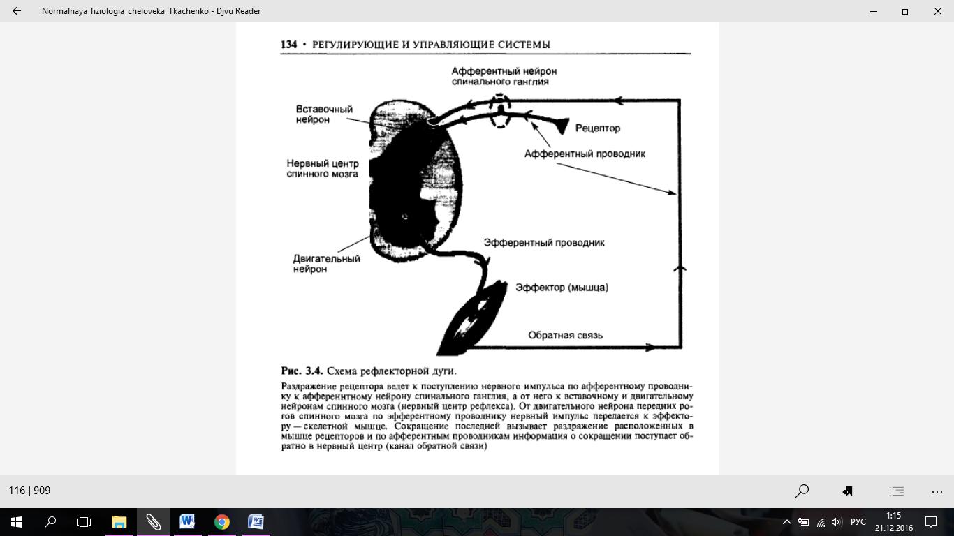Реферат по физиологии животных на тему  представляющая собой совокупность морфологически взаимосвязанных образований обеспечивающих восприятие передачу и переработку сигналов