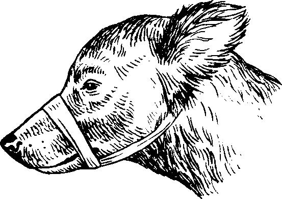 Введение  Фиксация челюстей собаки бинтом
