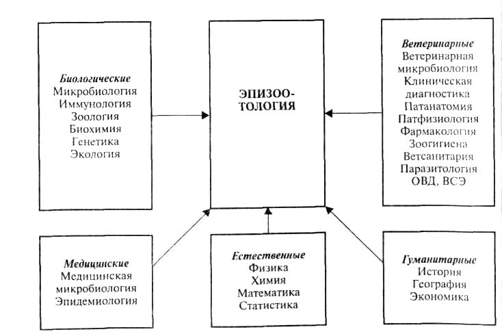 Курсовая по эпизоотологии 5 курс ветеринария сибирская язва