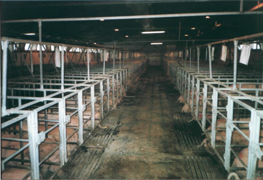 Заключение Приложения  Содержание свиноматок первого периода супоросности