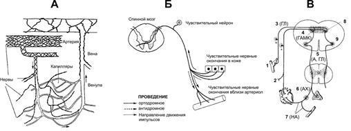 Расчет зубцов и интервалов экг