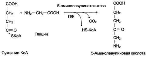Синтез гемоглобина регуляция процесса