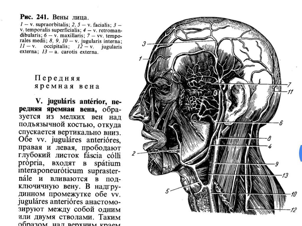 Реферат вены головы и шеи 4593