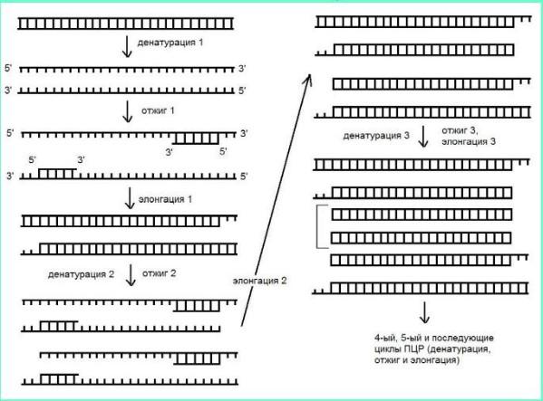 Методы днк диагностики реферат 9981