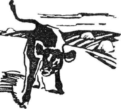 Стимуляция половой функции животных Приемы, стимулирующие половую активность быков