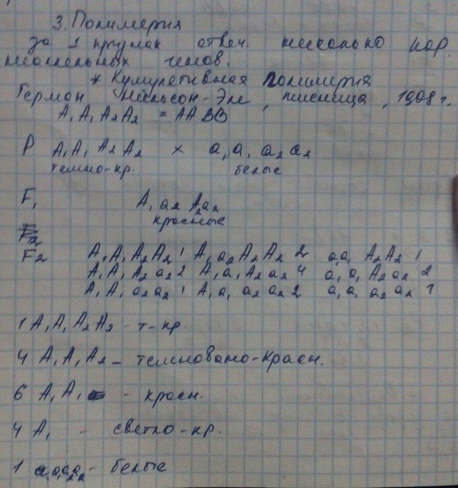 Условия и цитология третьего закона Менделя