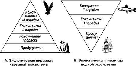 Экологические пирамиды работа с пирамидой моделью поиск моделей для фотосъемки