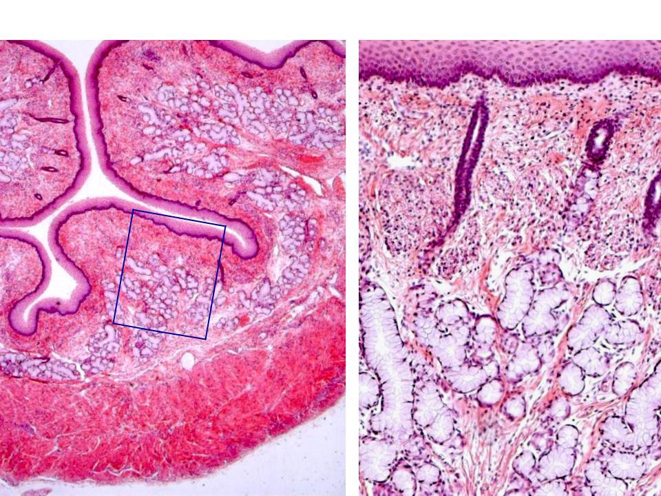 рио-де-жанейро жеребьевка препарат пищевода гистология картинка схема