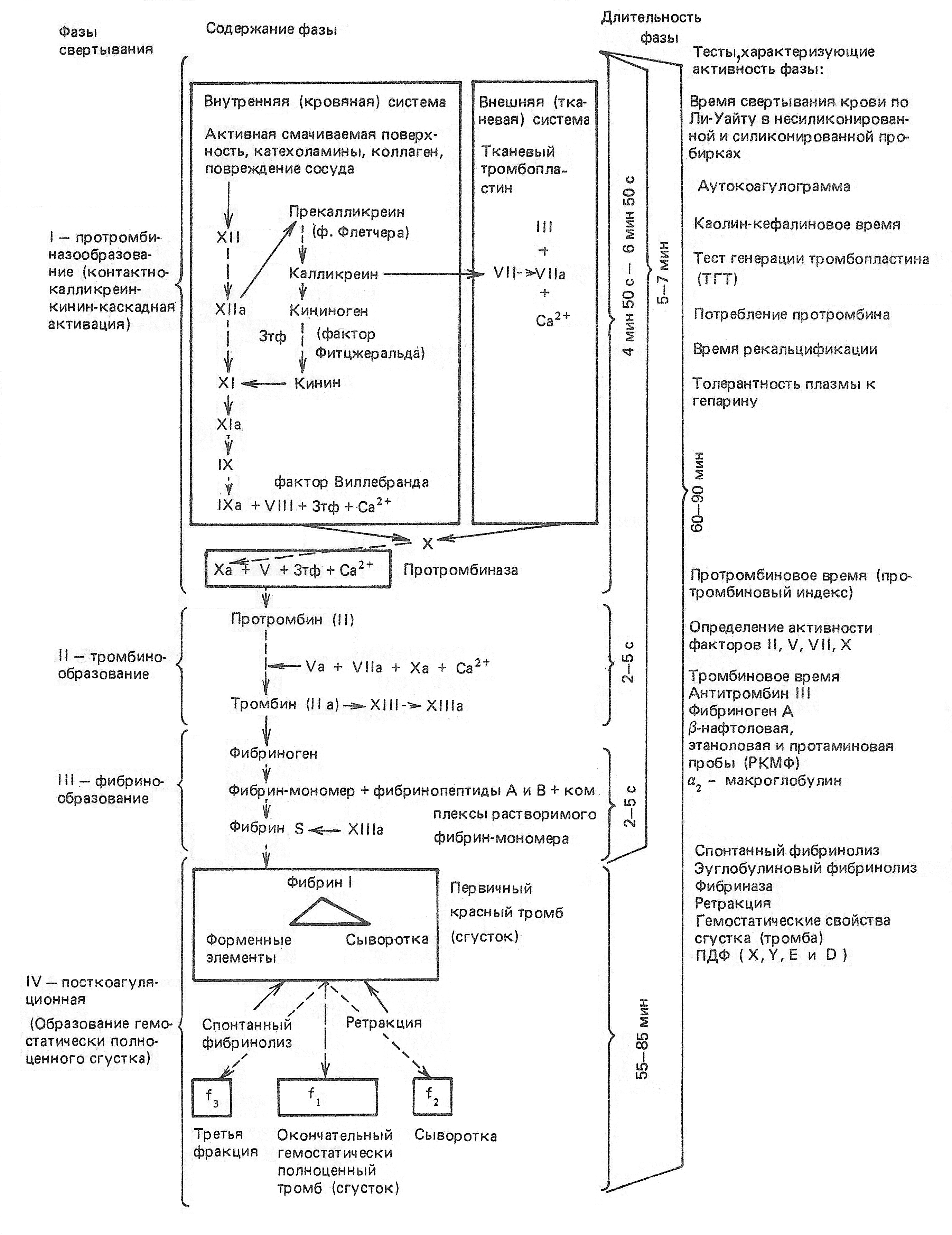 Методы исследования внутреннего механизма свертывания
