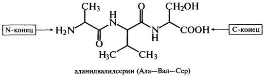 Свободные пептиды в организме представители номенклатура анаболические стероиды история