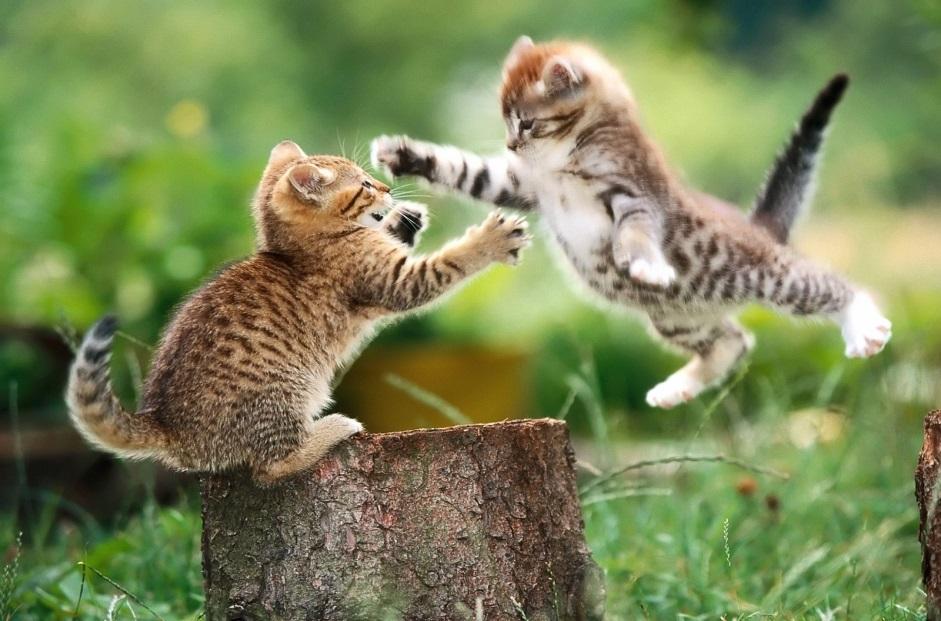 Игровое поведение у животных и человека зоопсихология доклад 1270