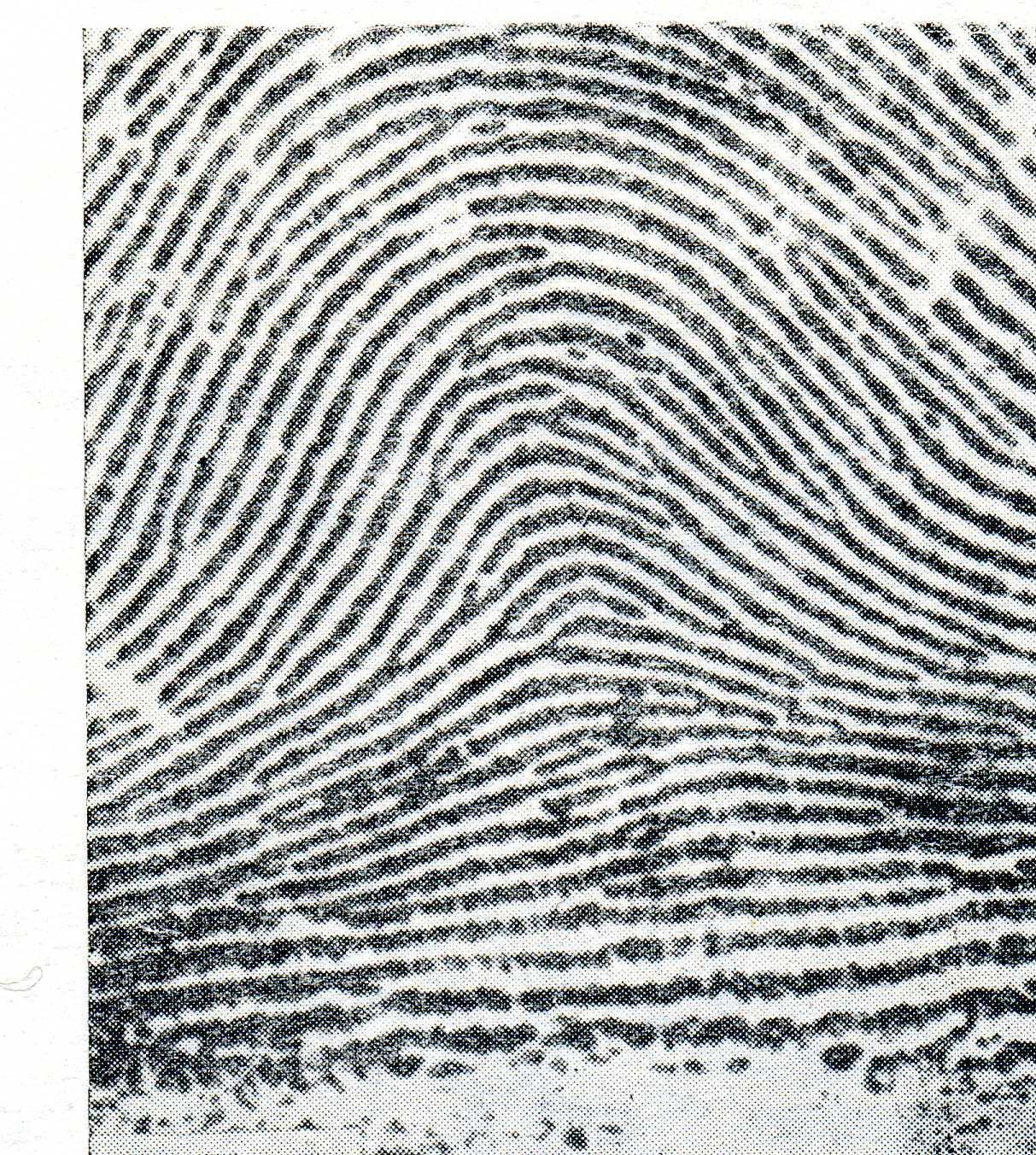 типы папиллярных узоров пальцев рук картинки бумаги красивая, простая