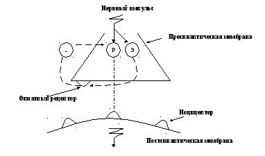 Схема действия аналгетиков на цнс