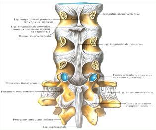 Суставы позвоночного столба болезни плечевого сустава после травмы