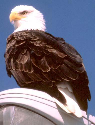 23 The Usa Bird Symbol