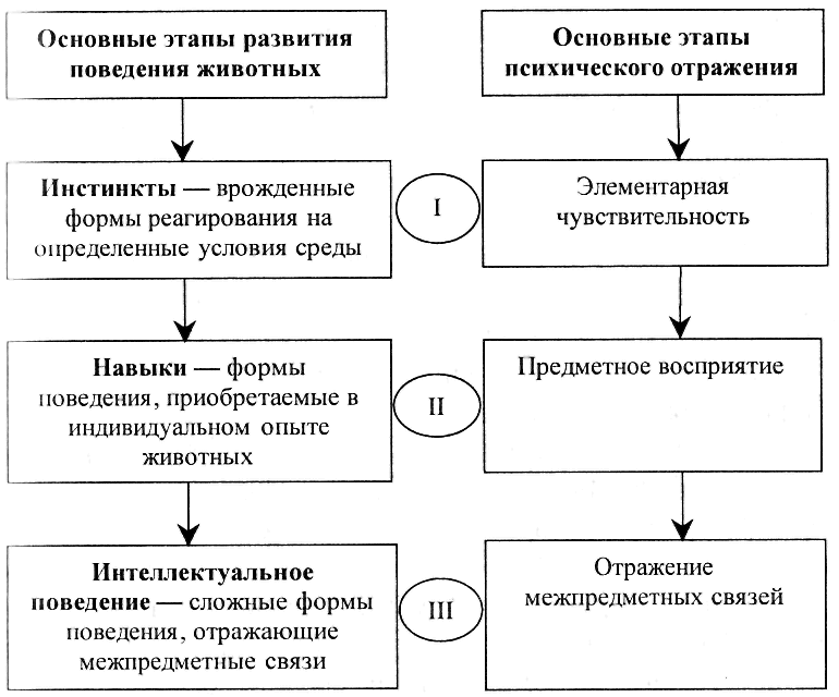 Основные этапы развития организации реферат 895