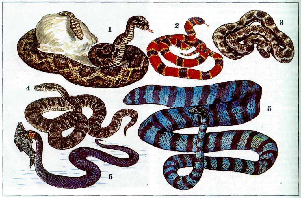 Картинки змеи по сказкам