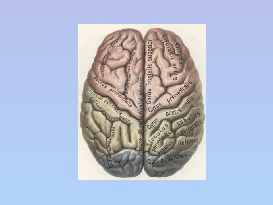 большие полушария мозга картинка музыку