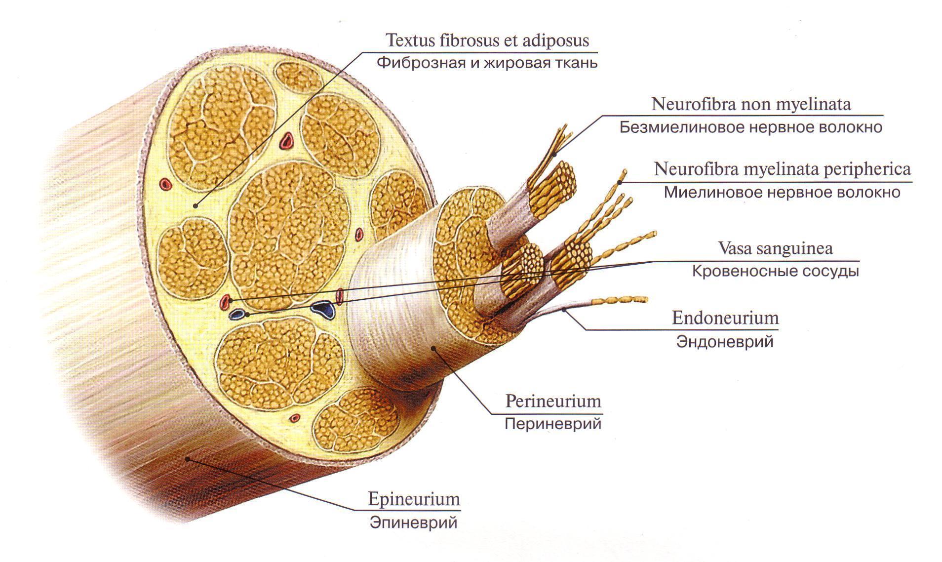 Что такое эндопротезирование? - Здоровье Инфо