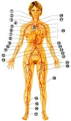 Советы при болезни сонной артерии