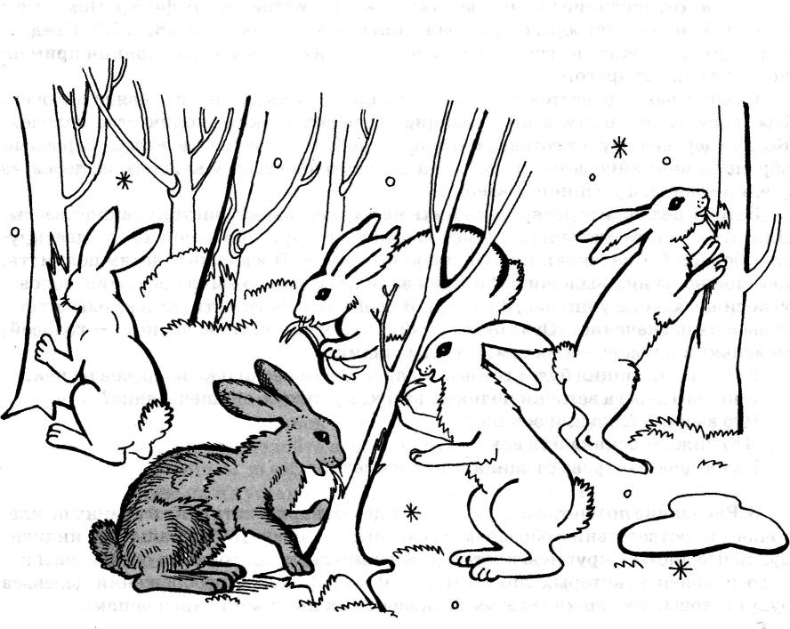 отчетливо где заяц на картинке таких
