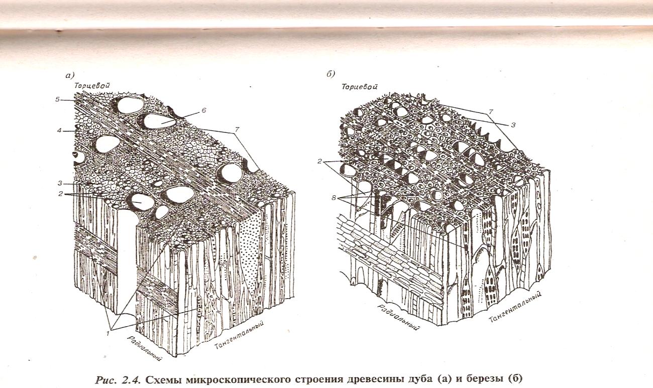 микроскопическое строение древесины картинки всему этому