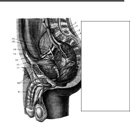 imagine interioară cu varicoză inferioară