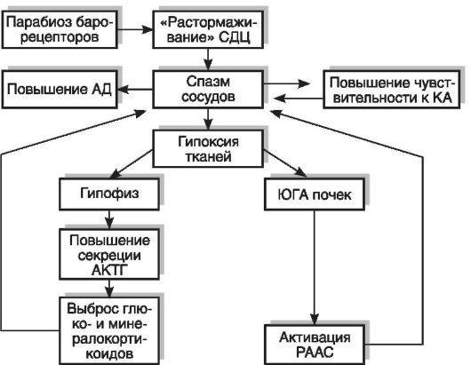 Этиология и патогенез артериальной гипертензии реферат 372