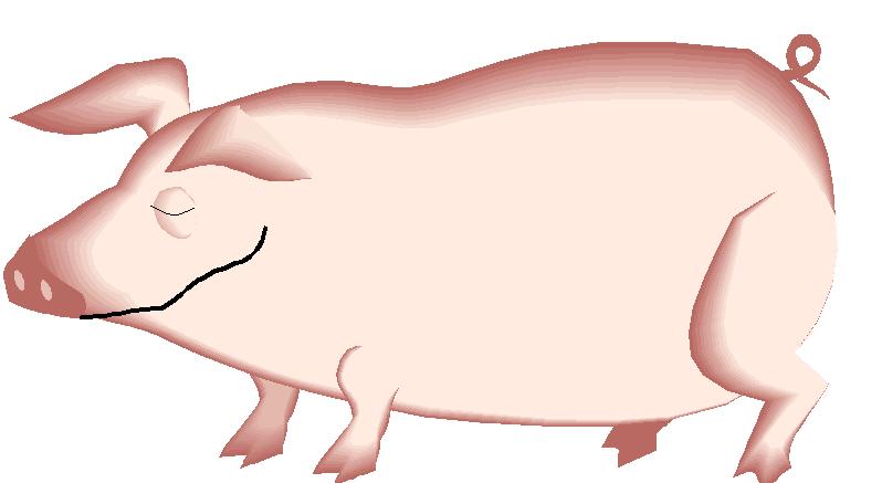 корова лошадь овца свинья картинки брызнувшая