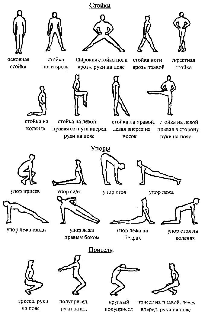 Реферат комплекс упражнений для развития мышц спины 6835