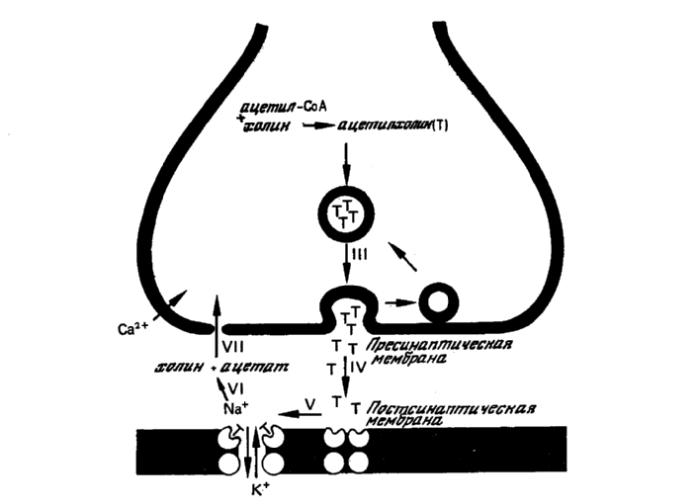 Что такое биохимия в урологии