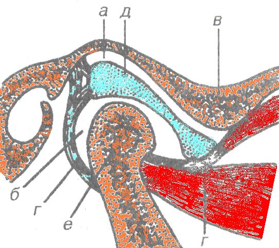 Связки височно нижнечелюстного сустава