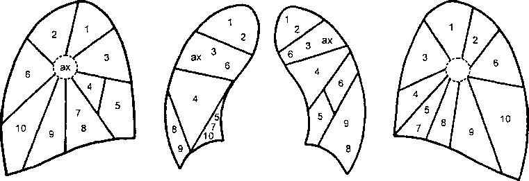 Сегментарное строение легких реферат 9055