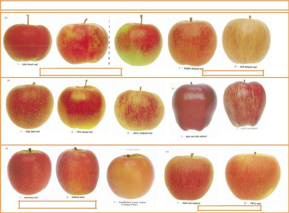 Яблоки картинки с названиями сортов