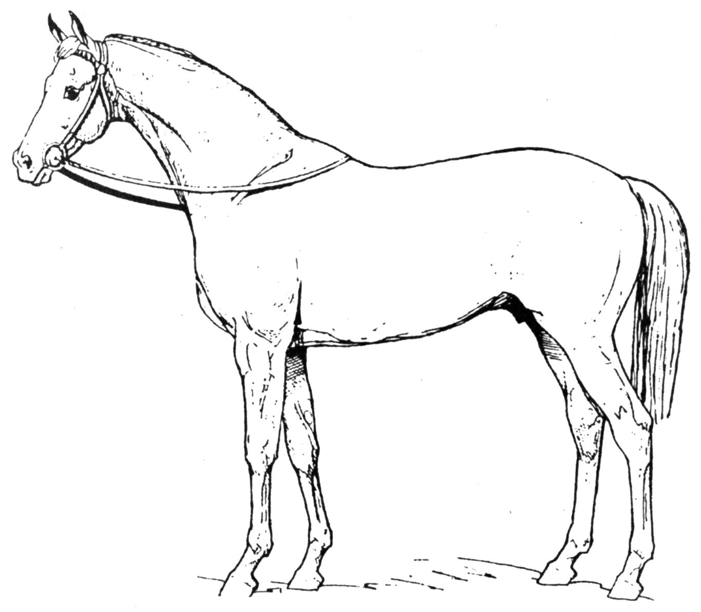 Картинка лошадь обозначение высокорослого сорта