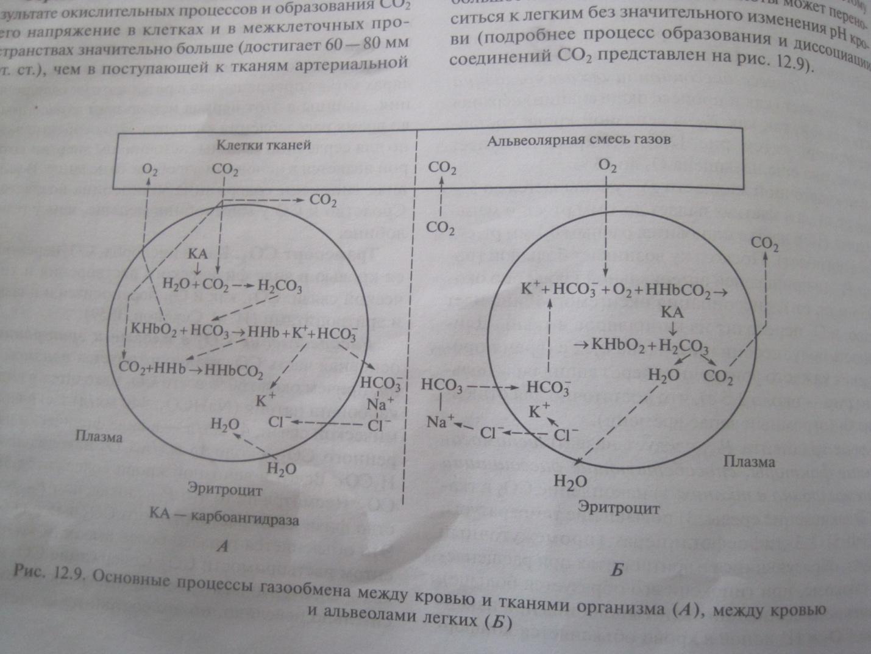 схема цикла сердечной деятельности