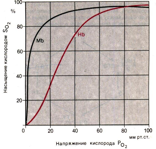 Парциальное давление кислорода в артериальной крови