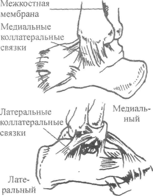 Гибкость в голеностопном суставе бандаж плечевой сустав улан-удэ