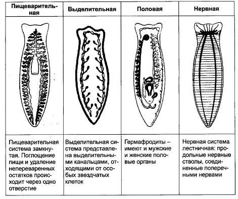 бады от паразитов отзывы