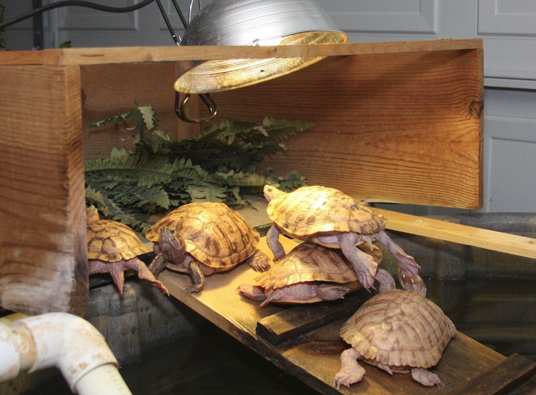 лампы для черепах красноухих купить