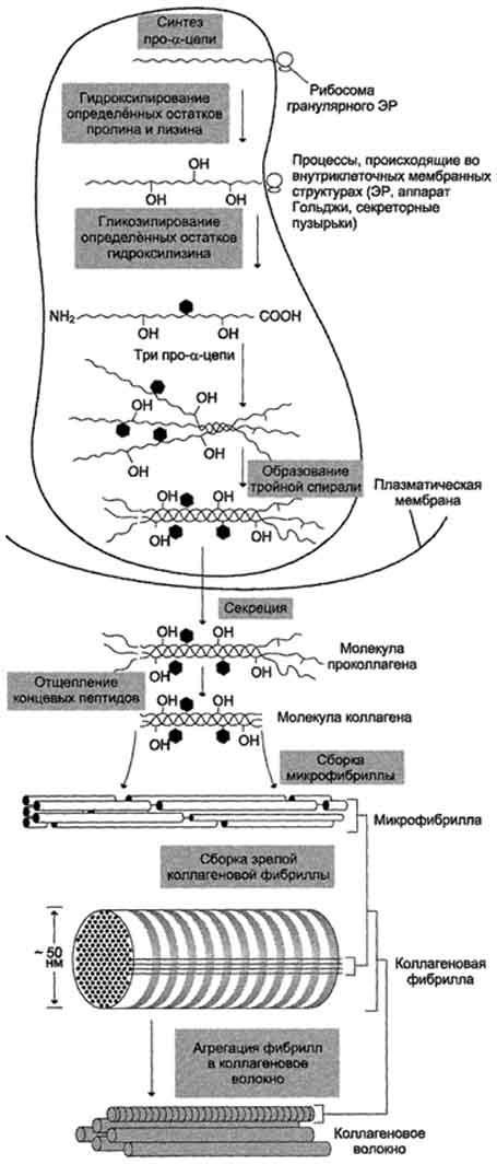 Активность каких ферментов изменяется при инфаркте миокарда