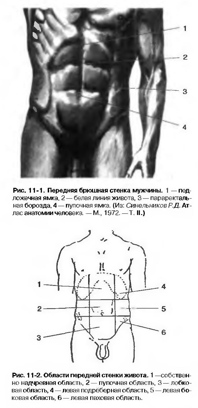 b13737350743 ... утроба, брюхо, пузо) — часть человеческого тела, расположенная между  грудью и тазом. Живот (abdomen) имеет стенки, ограничивающие полость живота.