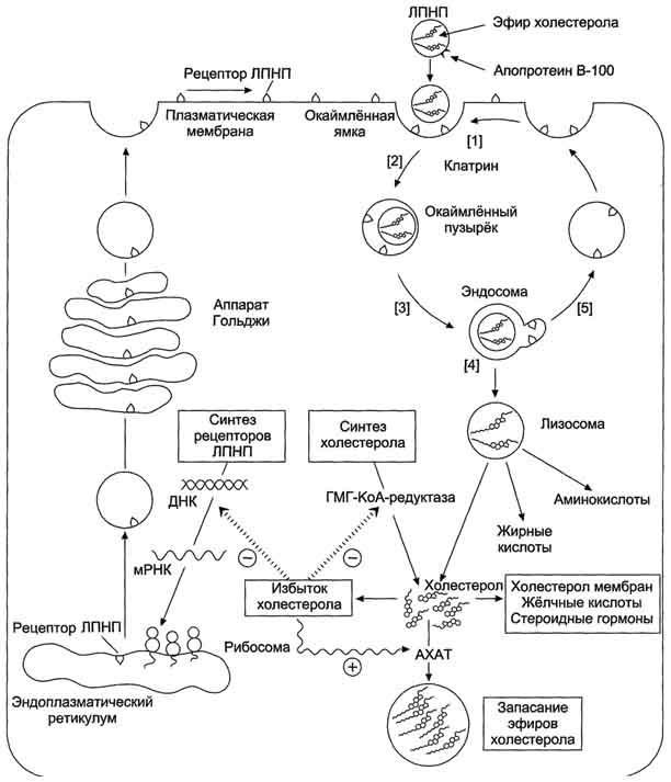 Реферат на тему болезни эндокринной системы