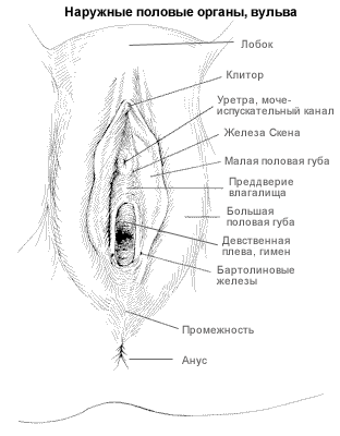 Urethra clitoris diagrams, sex city ring