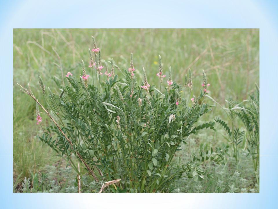 кормовые растения названия и фото твой