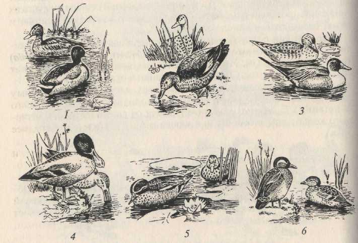 глава 6 эколого систематический обзор птиц
