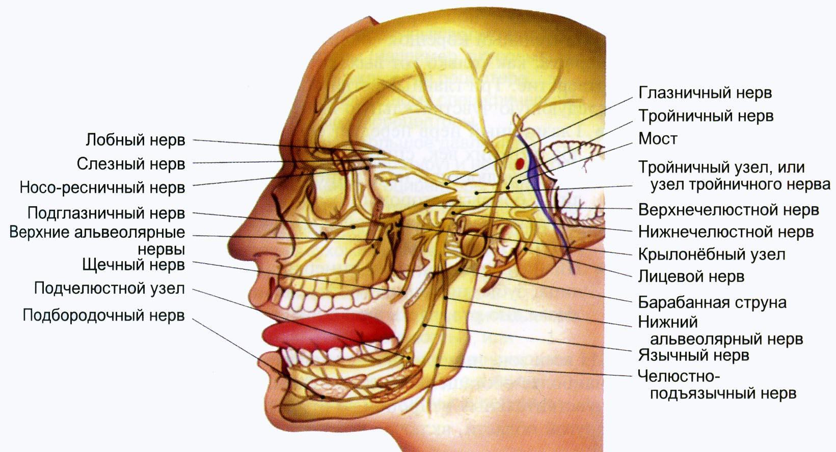 Затылочный нерв, воспаление: симптомы и лечение 78