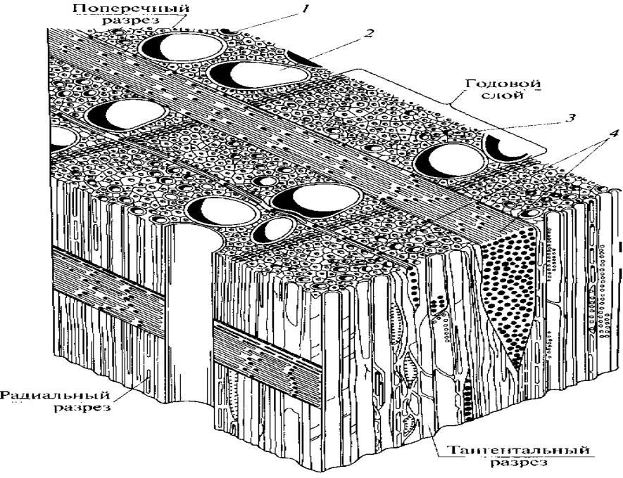 средства для схема микроскопического строения древесины дуба фотоаппараты имеют преимущество