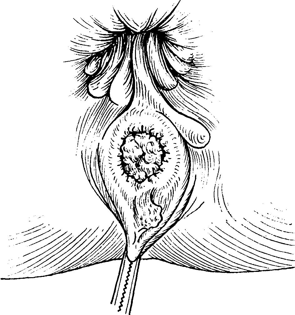 analnie-milashki-porno